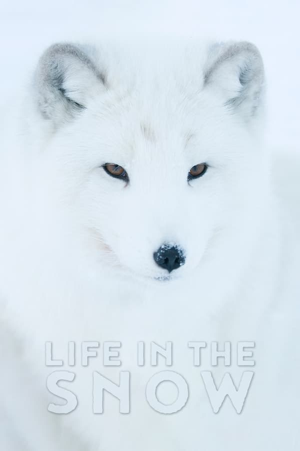 Cover of the movie Life In The Snow